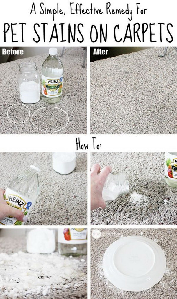 A Simple, Effective Remedy For Pet Stains On Carpets.