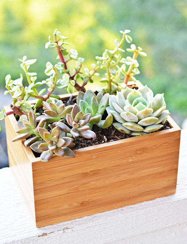 Bamboo Planter Box.